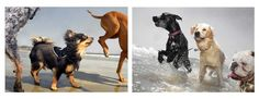 Images taken from Dogs on the Beach by Lara Jo Regan, Spring 2018