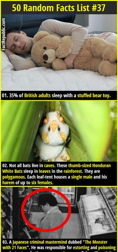 1. 35% of British adults sleep with a stuffed bear toy. 2. Not all bats live in caves. These thumb-sized Honduran White Bats sleep in leaves in the rainforest. They are polygamous. Each leaf-tent houses a single male and his harem of up to six females.