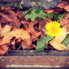 Flower, street Street, Flowers, Plants, Plant, Royal Icing Flowers, Walkway, Flower, Florals, Floral