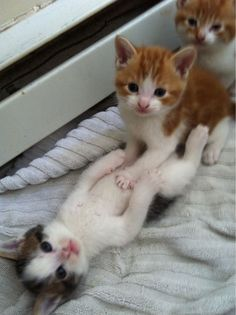 Smile for cats  kittens So Cute  RawDumps