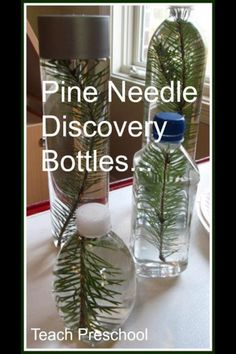 Discovery bottles - trees study