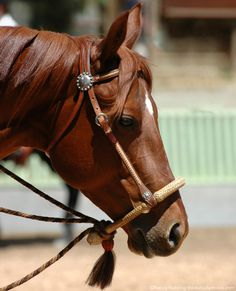 How to Use a Hackamore Could your horse go in a bosal or mechanical hackamore instead of a bit?