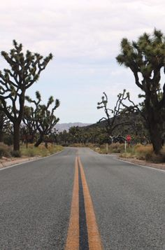 We are an online publication featuring the best travel, hospitality, photography and design content. Joshua Tree National Park, National Parks, Visit California, Golden State, Road Trip, Destinations, Public, Country Roads, Spaces