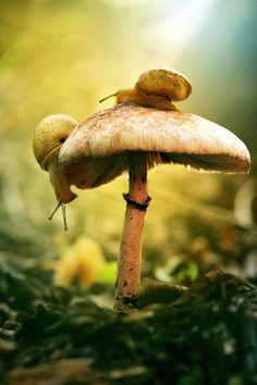 Snail and mushroom. Typical nature at Bali Botanical Garden, Bedugul, Tabanan. Mushroom Art, Mushroom Fungi, Animals And Pets, Cute Animals, Nature Animals, Flora Und Fauna, Woodland Forest, Tier Fotos, Macro Photography