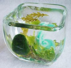 Woodsy Green Marimo Living Moss Ball Aquarium