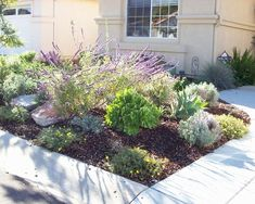 drought resistant landscaping | Landscape Drought Tolerant Design