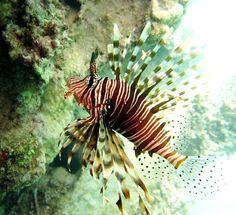 NewPix.ru - Подводный мир Красного моря в фотографиях