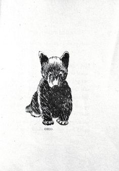 Animal - Bear - Baby bear drawing 011