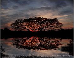 Tree of life at sunset. Thomas Bauer Photography