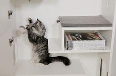 Spielvergnügen für Ihren vierbeinigen Liebling, Staufläche für Sie - Tiermöbel von FURniture smart living