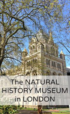 The Natural History Museum in London. Definitely go see the dinos!