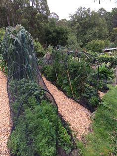 Vegetable gardens at The Garden of St Erth. Our Autumn Festival is on this weekend here - 5th & 6th April, so come on down and have fun! Details at: http://www.diggers.com.au/events-education/festivals/st-erth.aspx