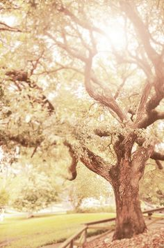 magic tree - fae forest Beautiful Scenery, Beautiful Things, Universally Speaking, Ethereal Photography, Socotra, Magical Tree, Indian Princess, Inspiring Pictures, Pastel Colours