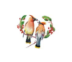 This is an archival quality print based on my original watercolor of two Cedar Waxwings. These are such gorgeous birds. They have such a smooth, lithe