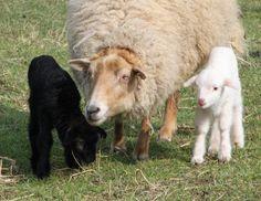 Herzlich Willkommen bei der Familie Stirnkorb und ihren Bearded Collies!