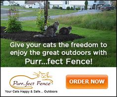 """#AD Have you seen this footage of  """"My #Cat from Hell"""" with Jackson Galaxy on Animal Planet featuring Purr..fect Fence - Fencing that allows your cat to safely enjoy the great outdoors! Click the pic for more info on Kawartha Lakes Mums blog."""