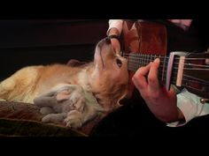 Green Day - Boulevard of Broken Dreams Fingerstyle (Trench & Maple) - YouTube