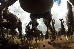 """""""The power of the Criollo horses at the Cabanha Ipuã located in Paranà, Brazil. The Criollo is the native horse of Uruguay (1910), Argentina (1918), Brazil (1932) and Paraguay. It may have the best endurance of any horse breed in the world next to the Arabian."""" (Photo by Chris Schmid)"""