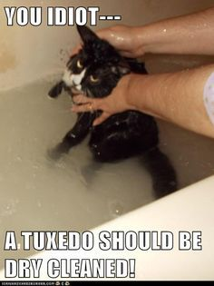 I laughed way to hard! I have a tuxedo cat! Lol