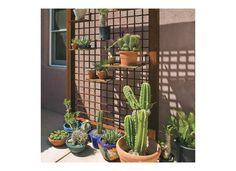 diversos tipos de cactus y maceteros