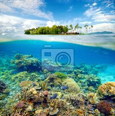 Choose a wall mural  , beach, blue - beautiful coral reef. PIXERS wall murals made ​​of great fabrics. Choose artistic photos from our catalog.