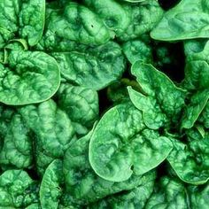 Spinach Growing Guide The secret to great spinach is to start early and plant frequently. Organic Gardening, Gardening Tips, Container Gardening, Gardening Books, Organic Farming, Vegetable Gardening, Fruit Garden, Edible Garden, Farm Gardens