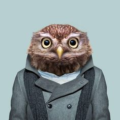Yago Partal - Photography and Digital Illustration - Zoo Portraits Zoo Animals, Animals And Pets, Funny Animals, Cute Animals, Bird Barn, Fred, Owl Pet, Curious Creatures, Little Owl