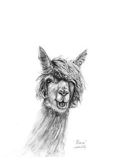 K Llamas - Renee Alpaca Drawing, Llama Pillow, Llama Arts, Lamas, Draw Animals, Llama Alpaca, Sketch Ideas, Sloths, Wallpaper Iphone Cute