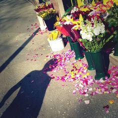 Milano in bloom! #vnz #photography #colours #shadows #milano_forever #tagsforlikes #love_milano #milanodavedere #instagrammers #igers #igersitalia #igersmilano #igerslombardia #milano_in #milano_forever #comune_milano #pleasefollow #instapic #spaziofantasia #springbreak #milan #flowers #like4like #happy by veronica.nina.z