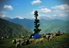 Experience Remote Village Life and Follow the Path of Nomadic Herders at Kalap