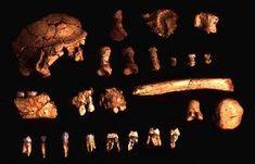 800.000 años atrás en el tiempo, una especie común a los neandertales y a los homo sapiens vivía en la Sierra de Atapuerca (Burgos). Homo antecessor salió a la luz en 1997.