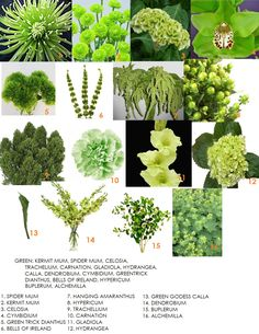 Wedding Flower Arrangements Green Flowers - Ahh Green, there is nothing quite like it to evoke the feeling of something fresh and crisp. Green has been a rising trend and for good reason. Some of the flowers that are available in green are n… Arrangements Ikebana, Wedding Flower Arrangements, Wedding Bouquets, Floral Arrangements, Wedding Flowers, Wedding Bridesmaids, Types Of Flowers, Green Flowers, Colorful Flowers