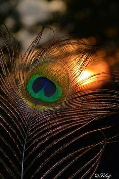 PEACOCK symbolises New beginnings 👣🌟 🇦 🇳 🇩 Eternal life 🤗😇 ➖➖➖➖➖➖➖➖➖➖➖➖ Morr pankh series:- Post ➖➖➖➖➖➖➖➖➖➖➖➖ Radha Krishna Pictures, Radha Krishna Photo, Krishna Photos, Shree Krishna, Krishna Art, Krishna Flute, Krishna Statue, Durga Images, Ganesh Images