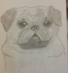 pug sketch by Jade hurdle