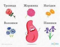 Квіти українською мовою. Частина 1