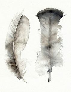 Watercolour feathers.