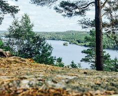 Happy Sweden National Day! I don't know what I love more about Sweden... the thousands of archipelago islands or the thousands of lakes surrounded by evergreens. Both are pretty awesome. 🇸🇪 adventure,visitsweden,sverige,travel,vsco,gunnargo,photooftheday,explore,ig_sweden,agameoftones,sweden,igersboston,igers,wu_sweden,picoftheday,lillahålsjön,vscocam,instagood,visitswedenus,lake,vscofilm,vscogood,forest,hyssna,swedenimages,igboston,nationalday,swedenshots #photography #travel #adventure…