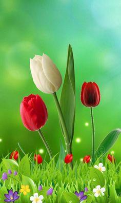 Rose Flower Wallpaper, Flowery Wallpaper, Scenery Wallpaper, Colorful Wallpaper, Beautiful Rose Flowers, Beautiful Flowers Wallpapers, Flowers Nature, Iphone Wallpaper Video, Cellphone Wallpaper