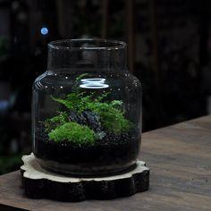 Terrarium, Aquarium, Home Decor, Terrariums, Goldfish Bowl, Decoration Home, Room Decor, Aquarium Fish Tank, Aquarius