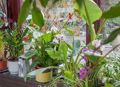 Les soins à apporter aux plantes d'intérieur en hiver