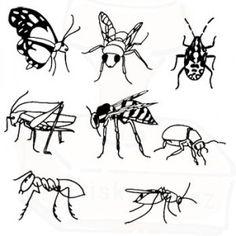 Luční hmyz