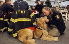 The lesser known of New York's canine heroes, comfort dogs, such as this golden retriever, help soothe those affected by the terrorist attacks of September 11, 2001. Similar to search-and-rescue dogs, comfort dogs travel to disaster scenes to aid relief efforts. Studies show that people experience physiological changes—such as a drop in heart rate and blood pressure—when they pet animals.