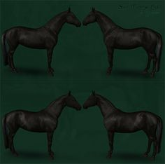 2 shine markings - by Julie Wilson on Equus