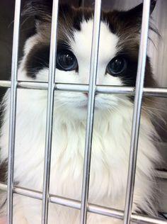 Cute cat..