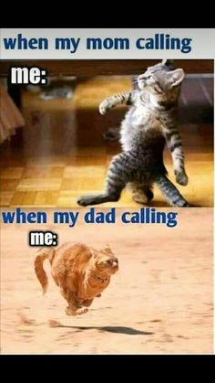 Funny Cartoon Memes, Funny Fun Facts, Very Funny Memes, Latest Funny Jokes, Funny School Memes, Funny Animal Jokes, Cute Funny Quotes, Funny Puns, Funny Laugh