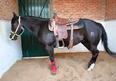 8 Tips for Training Your Horse to Stand Quietly When Tied