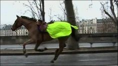 Runaway horse in French capital