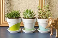 Low-Maintenance Plants + Flowerpot Painting Ideas - 25 DIY Dorm Room Ideas on HGTV - white flowerpots Small Indoor Plants, Cool Plants, Diy Dorm Decor, Dorm Decorations, Room Decor, Bedding Decor, Wall Decor, Succulent Pots, Cacti And Succulents