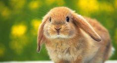conigli cuccioli - Cerca con Google
