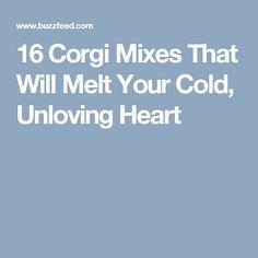 16 Corgi Mixes That Will Melt Your Cold, Unloving Heart